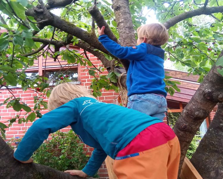 Kinder im Kirschbaum