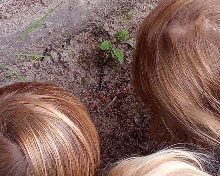 Kinder schauen Libelle an