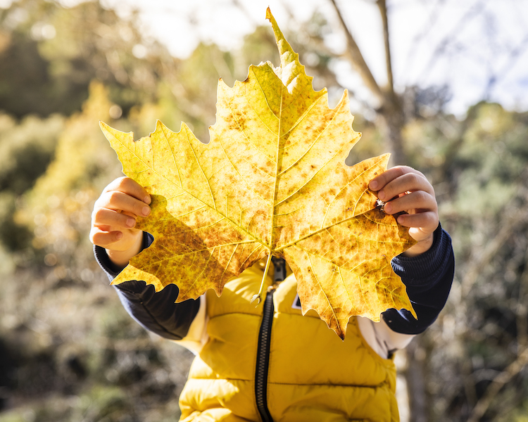 Kind mit Blatt, Herbst, Residenz