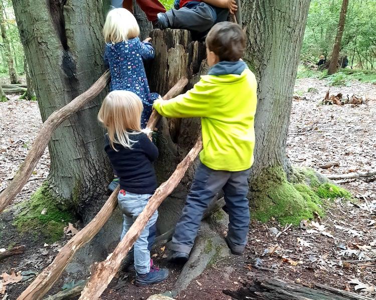 Kletterhilfe, Wald, Baumstumpf