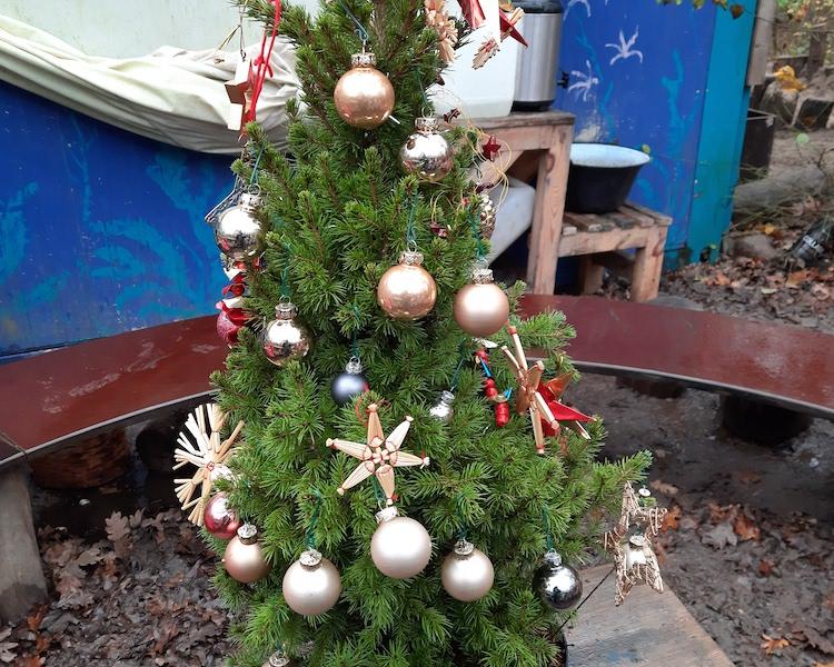 Weihnachtsbaum, Christbaum, Tannenbaum, Weihnachten