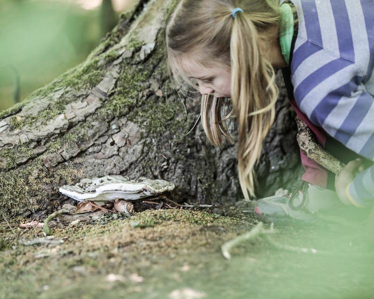 Konzept, Kind entdeckt Baumpilz