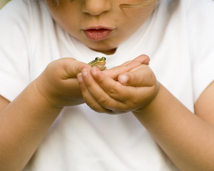 Konzept, Kind mit Frosch