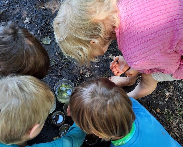 Moorbek, kleine Tiere